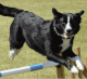 Éducateur Canin France : de l'accompagnement pour vivre avec votre chien
