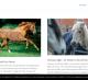 Tout savoir sur l'alimentation du cheval