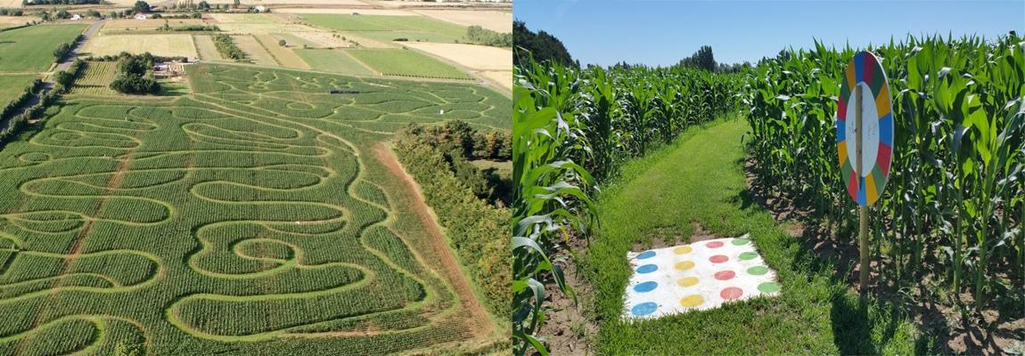 Labyrinthe de maïs - Talmont Saint Hilaire